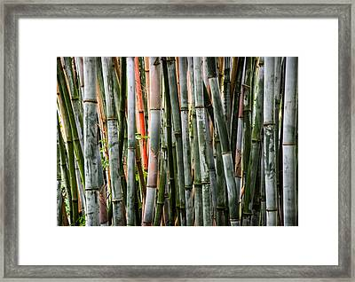 Bamboo Seduction Framed Print by Karen Wiles
