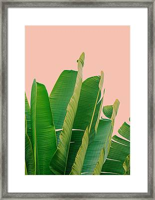 Banana Leaves Framed Print by Rafael Farias