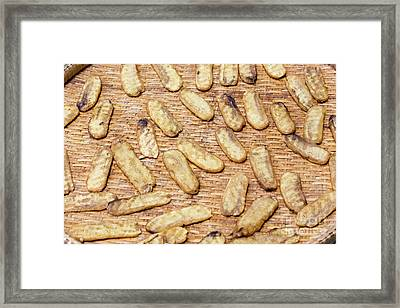Banana Preserved By Sundry Method  Framed Print by Maurizio Biso
