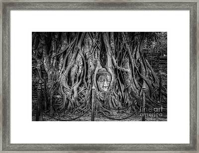 Banyan Tree Framed Print by Adrian Evans