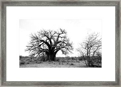 Baobab Landscape Framed Print by Bruce J Robinson