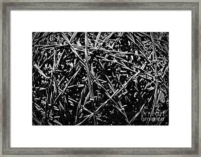 Barbed Wire Monochrome Framed Print by Chalet Roome-Rigdon