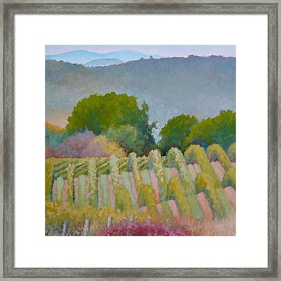 Barboursville Vineyards 1 Framed Print by Catherine Twomey