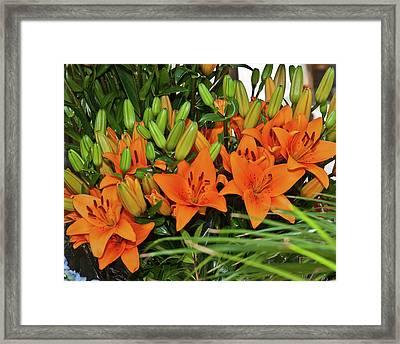 Barcelona Lillies Framed Print by Michael Flood