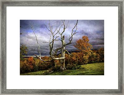 Bare Autumn Tree Framed Print by Garry Gay