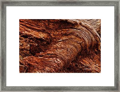 Bark Art Swirls Framed Print by Blake Richards