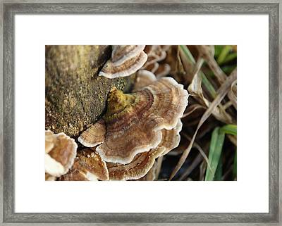 Bark Fungus Close Up Framed Print by Adrian Wale