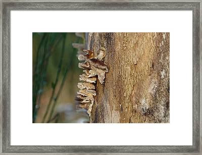 Bark Fungus On Tree Trunk Framed Print by Adrian Wale