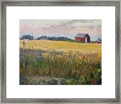 Barn In A Field Of Grain Framed Print by Ylli Haruni