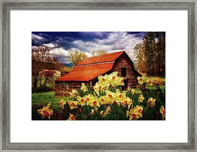 Barn In Daffodils Framed Print by Debra and Dave Vanderlaan