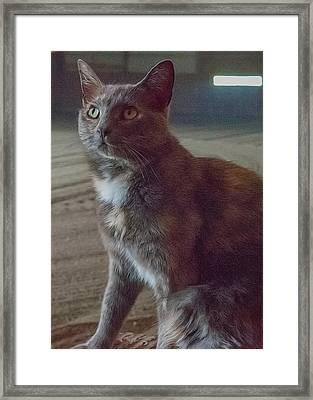 Barn Kitty Framed Print by Guy Whiteley