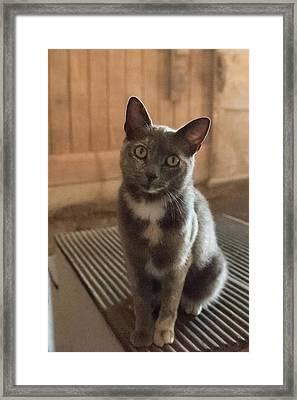 Barn Kitty II Framed Print by Guy Whiteley