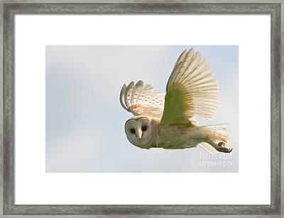 Barn Owl Framed Print by Ruth Hallam