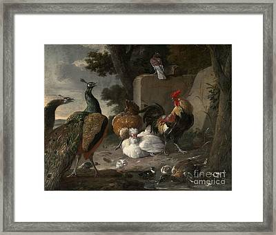 Barnyard Fowl And Peacocks Framed Print by MotionAge Designs