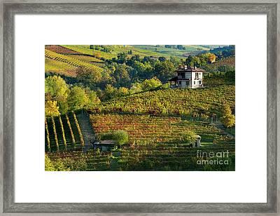 Barolo Vineyard Framed Print by Brian Jannsen