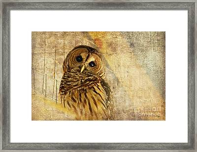 Barred Owl Framed Print by Lois Bryan