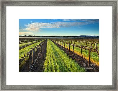 Barrossa Vineyard Sunrise Framed Print by Mike Dawson