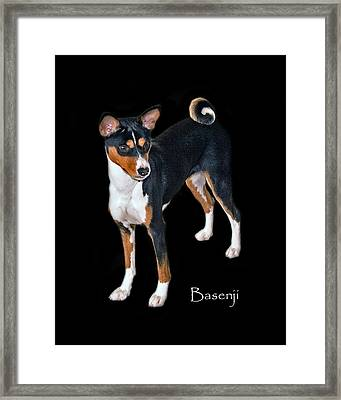 Basenji Framed Print by Larry Linton