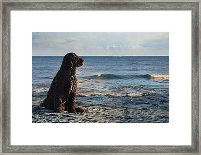 Bask In The Sun Framed Print by Robin-lee Vieira