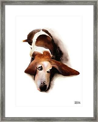 Basset Hound I - Lulu Framed Print by David Breeding