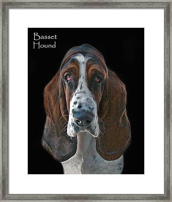 Basset Hound Framed Print by Larry Linton