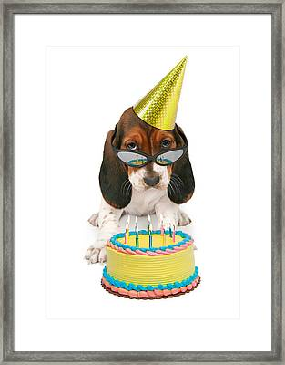 Basset Hound Puppy Wearing Sunglasses  Framed Print by Susan  Schmitz