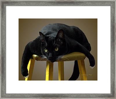 Batcat Framed Print by Tom Buchanan