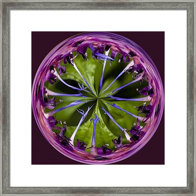 Batchelor Button Orb By Jean Noren Framed Print by Jean Noren