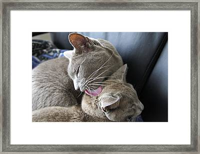 Bath Time Framed Print by James Steele