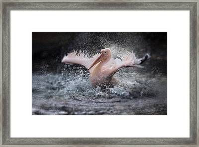 Bathing Fun ..... Framed Print by Antje Wenner