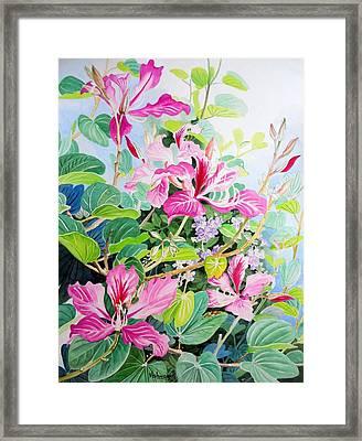 Bauhinia And Duranta Framed Print by Vishwajyoti Mohrhoff