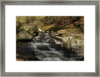 Bavarian Forest River Framed Print by David & Micha Sheldon