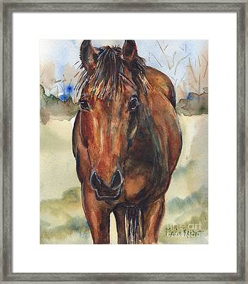 Bay Horse Painting In Watercolor Framed Print by Maria's Watercolor