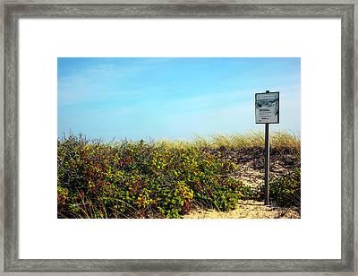 Be Kind To The Dune Plants Framed Print by Madeline Ellis