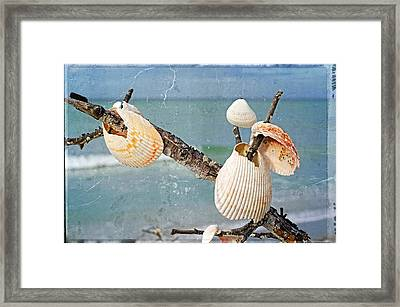 Beach Art - Seashell Shrine - Sharon Cummings Framed Print by Sharon Cummings