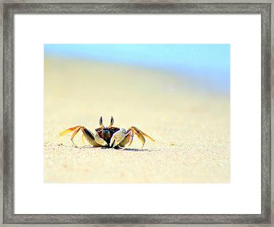 Beach Crab Framed Print by A Rey