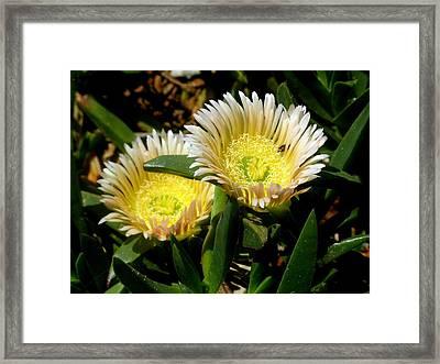 Beach Flower Framed Print by Joyce Woodhouse