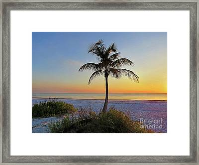 Beach Palm Framed Print by Chris Andruskiewicz