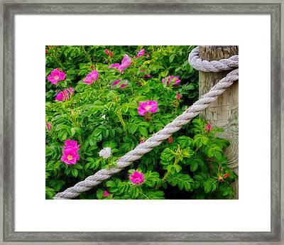 Beach Rose Framed Print by Bill Wakeley