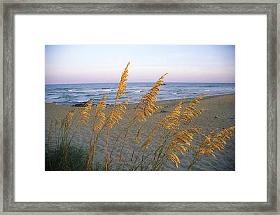 Beach Scene With Sea Oats Framed Print by Steve Winter