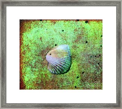 Beach Treasure Framed Print by Susanne Van Hulst