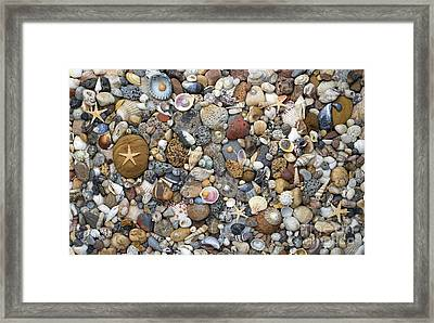 Beachcombing Pattern Framed Print by Tim Gainey