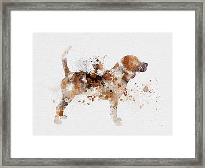 Beagle Framed Print by Rebecca Jenkins