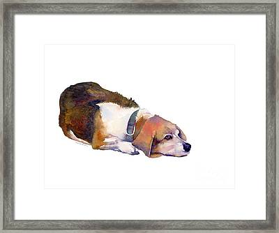 Beagle Thoughts Framed Print by Amy Kirkpatrick
