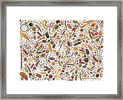 Bean Painting Framed Print by Rachel Pedder-Smith