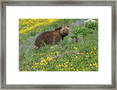 Bear In Blooms Framed Print by Sandy Sisti