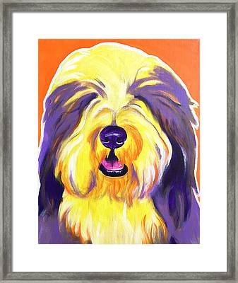Bearded Collie - Banana Framed Print by Alicia VanNoy Call