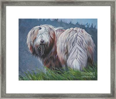 Bearded Collie In Field Framed Print by Lee Ann Shepard