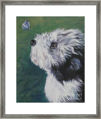 Bearded Collie Pup With Butterfly Framed Print by Lee Ann Shepard