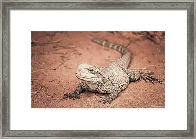 Bearded Dragon Lizard Framed Print by Wim Lanclus